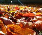 Hojas secas en otoño