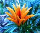 Exótica flor naranja