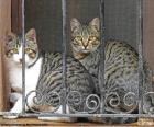 Dos gatos en una ventana