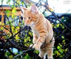 Un gatito en un árbol