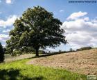 Árbol en el campo arado