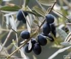 Rama de olivo negro