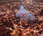 Recogiendo las hojas