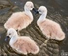 Tres pequeños cisnes