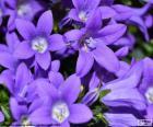 El color violeta o púrpura