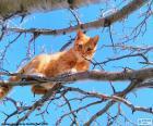 Gato en una rama