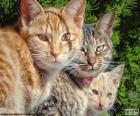 Tres gatos miran fijamente