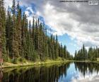 Lago Irene, Estados Unidos