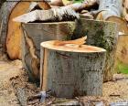 Restos del tronco y ramas de un árbol recién cortado