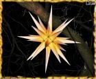 Una bonita estrella de Moravia para decorar y iluminar la Navidad