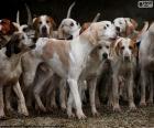 Perros de caza
