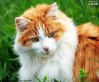 Un gato elegante