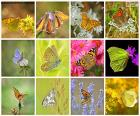 Collage de mariposas