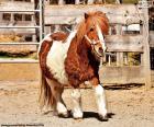 Un poni es un caballo pequeño