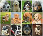 Collage de perros