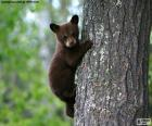 A brown bear cub climbs a tree