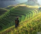 Terrazas de arroz, Tailandia