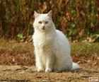Gato blanco sentado