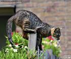 Gato en una valla