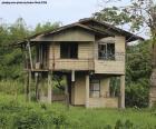 Vieja casa en el bosque