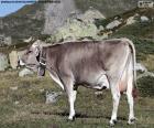 Vaca en alta montaña