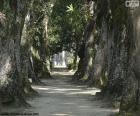 Grandes árboles, Brasil