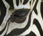 Ojo de cebra