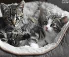 Dos lindos gatitos