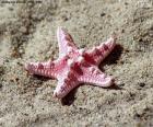 Bonita estrella de mar