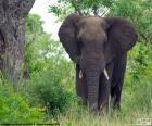 Gran elefante en el bosque