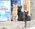 Gatos en la puerta