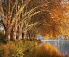 Árboles junto al lago en otoño