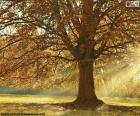 Árbol de hoja caduca en otoño