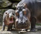 Puzzle de Hipopótamo junto a su cría