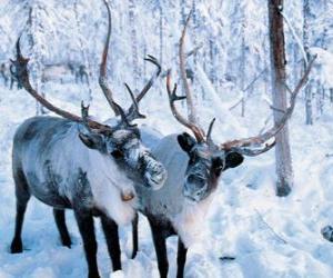 Puzzle de Renos navideños por el bosque