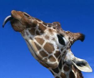 Puzzle de Retrato de la cabeza de una preciosa jirafa