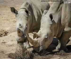 Puzzle de Rinocerontes comiendo
