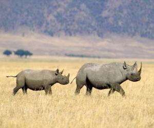 Puzzle de Rinocerontes negros en la sabana