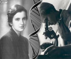 Puzzle de Rosalind Franklin (1920 - 1958), pionera en la investigación del ADN