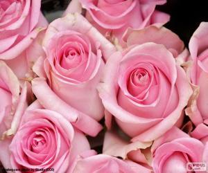 Puzzle de Rosas de color rosa