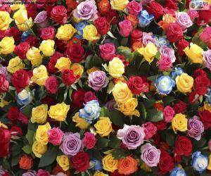 Puzzle de Rosas de varios colores