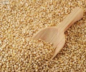 Puzzle de Semillas de quinua o quínoa