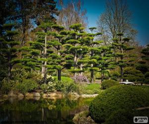 Puzzle de Sugi o cedro japonés