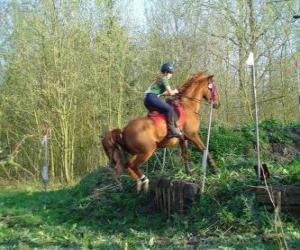 Puzzle de Técnica de Recorrido Ecuestre de Competición, pone a prueba el entendimiento entre el caballo y el jinete mediante distintas pruebas.