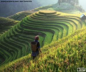 Puzzle de Terrazas de arroz, Tailandia