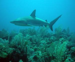 Puzzle de Tiburón en el fondo del mar