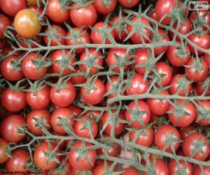 Puzzle de Tomate en rama