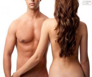 Puzzle de Torso masculino y espalda femenina
