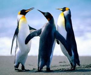 Puzzle de Tres bonitos pinguinos