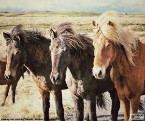Puzzle de Tres caballos islandeses